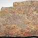 Trace fossils in siltstone (Hinton Formation or Bluefield Formation, Upper Mississippian; Oakvale School outcrop - Rt. 112 roadcut, Oakvale, West Virginia, USA) 2