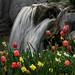 Tulip+Tumble