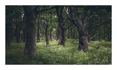 Whispering forest (Andreas Larzon Photography) Tags: andreaslarzon centeredandsymetry forrestlandscape grass green järfälla landscape landscapephotography midday naturallight nature nikond7200 norrajärvafältet oaktree ruleofthirds sigma24105mmf4dgoshsmart summer sweden treetrunk woodlandphotography branches gloomy outdoor