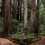 Muir Wood National Monument thumbnail