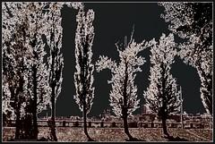 Vinnytsia embankment. (Ігор Кириловський) Tags: vinnytsia embankment pseudosolarisation ukraine slr nikonf5 af zoomnikkor 28105mmf3545d film kodak colorplus200 promaster spectrum7uv c41 vinnytsya