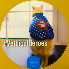 #VethicalHeroes (Timothy Valentine) Tags: vcahanson squaredcircle 2017 thevet cat sticker datesyearss 0917 hanson massachusetts unitedstates us