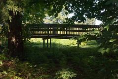 Terrapin Nature Area, Stevensville MD 13 (Larry Miller) Tags: naturepark conservation chesapeakebay maryland 2017