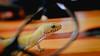A little guy call LG (lin.chinhu) Tags: photograph photographer photo saigon saigonese local vietnam vietnamese animal reptile retilelover reptiles leopardgecko gecko little small cute cutie canon canon60d 50mm