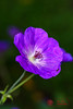 Arboretum-09450-Edit.jpg (Dr. JS Photography) Tags: graden newjersey color flower summit bloom reevesreedarboretum arboretum landscape