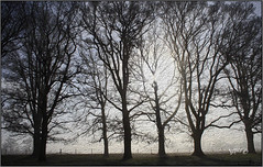 Winter Trees. (Picture post.) Tags: landscape nature green trees mist winter sunburst fence silhouettes digital art paysage brume