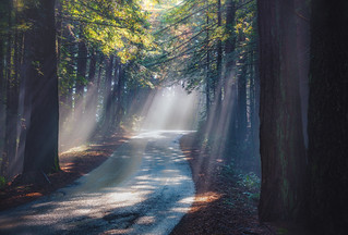 sunbeams on a winding road