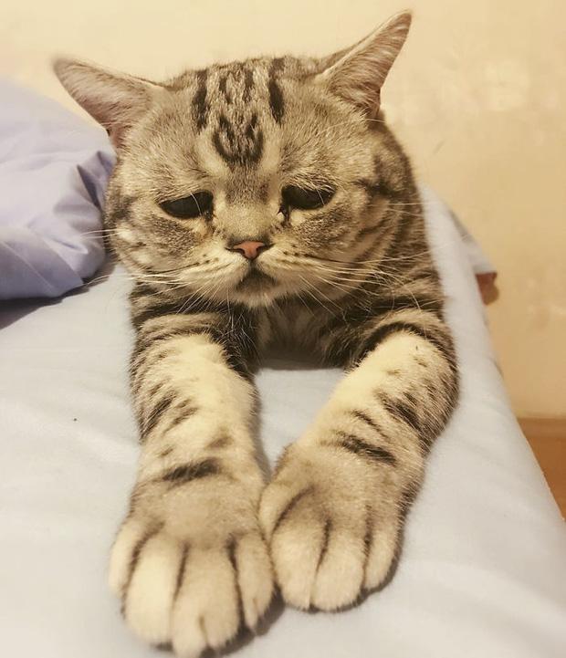 Nhìn bộ mặt buồn thiu như mất sổ gạo của boss mèo đáng yêu, con sen nào cũng muốn ôm lấy một cái - Ảnh 19.