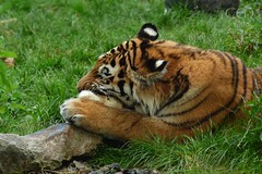TIGER & BUNNY  画像