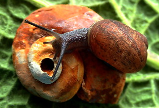 EVOLUTION......Fossil - Snail......Macro Mondays