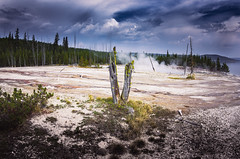V of Victory (Yoalad) Tags: tree death nature landscape sky drama pentax pentaxart yellowstone