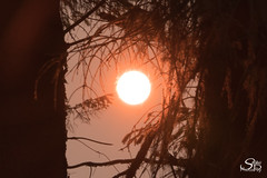 Beauty and the Beast (Selkii's Photos) Tags: ash britishcolumbia canada dusk evening fire smog smoke sun sunset trees