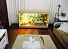 Terrário Iguana 180x70x100cm (seemanni.terrarios) Tags: terrários terrarios terrario terrário iguana iguanas jiboia cornsnake leopardgecko jabuti tartaruga repteis