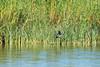 Vogelwelt (juergen.treiber) Tags: nordsee jadebusen sehestedt