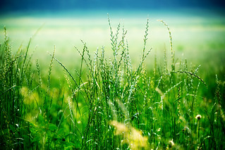 Nature Growth Green Color Beauty In Nature Grass Freshness Agriculture Outdoors Rural Scene Tranquility Cereal Plant Close-up Landscape Photography Scenics Summertime Landscape_Collection Landscape Landscape_photography Summer Nsnfotografie Beauty In Natu