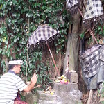 Tumpek Uduh ceremony to appreciate trees