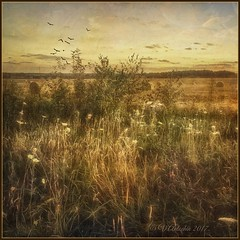 Evening on the field (odinvadim) Tags: mytravelgram paintfx textured textures iphone editmaster travel iphoneography sunset evening iphoneonly painterly artist snapseed landscape photofx specialist iphoneart graphic painterlymobileart