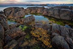 Seaweed (languitar) Tags: norway hdr pool ocean sunset water seaweed sky billard colorefex4 rock photography sea colorefex kingdomofnorway nikcolorefex norge rocks vestagder no lindesnes