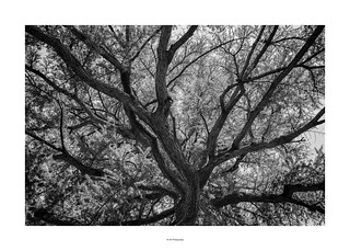 Poem of branches