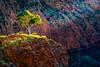 20170615-007-Ormiston Gorge-Flickr.jpg (Brian Dean) Tags: nt digitaldreamtime ormistongorge austgeopending phototravel slideshow facebook nature flickr photocourse