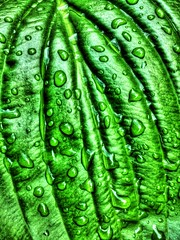 Mountain Dew (mmalinov116) Tags: dew mountain fresh freshness green water
