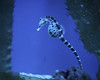 IMG_8217 (hopefuldoubtful) Tags: seahorse genoa genova italy acquariodigenova
