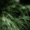 Forest Grass 014 (noahbw) Tags: d5000 dof nikon oldschoolforestpreserve abstract blur depthoffield forest grass landscape natural noahbw square woods