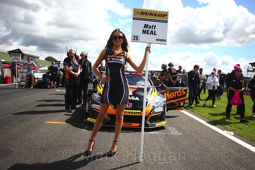 Matt Neal on the BTCC grid at Snetterton, July 2017