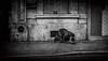 scènes de rue (dnobiliasaphus) Tags: sansdomicile rue détresse misère