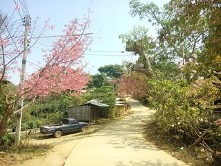 doi suthep pui chiang mai - thailande 1