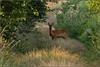 IMG_1688 (Koberek@) Tags: canon 100d 55250 sulików nature dof 7dwf tree light landscape europe dolny śląsk lower silesia koberek
