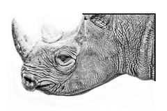 Rhinoceros (Niek Goossen) Tags: rhinoceros neushoorn zoo dierentuin animal dier safari blackwhite zwartwit