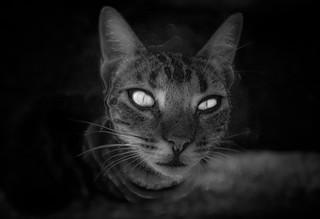 My eyes, is my soul.
