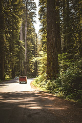 There's Fire Where You're Going (Kristen Palatella) Tags: forest woods woodland redwood redwoods redwoodnationalforest california ca northerncalifornia northernca car road nature landscape tree trees tall large woody green