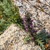 2017.09.05-34-2 (ivoryblushroses) Tags: colorado flora mtevans nature smoke
