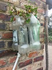 Imágenes de Reciclaje (yesicabalentinaperezojeda37) Tags: flores serpiente llantas lampara pavoreal casa tubos materas bombillos manillas
