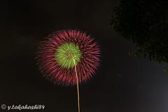 _IMG6440.jpg (y.takahashi84) Tags: hanabi fireworks 花火 東松山 日本の夏 japan saitama