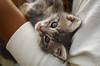 IMG_2656 (kz1000ps) Tags: boston massachusetts bostoncommon common park cats kitties kittens felines caturday purr catcafe brighton humane society adoptions