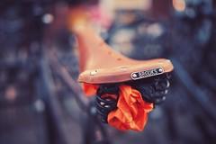 brooks on fire (christian mu) Tags: brooks bike bikesaddle sattel saddle fahrrad fahrradsattel münster muenster germany christianmu depthoffield dof bokeh sonya7ii sony distagon distagon3514 35mm 3514