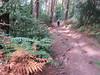 UK - Somerset - Exmoor National Park - Near Horner - Walking along footpath (JulesFoto) Tags: uk england somerset clog centrallondonoutdoorgroup exmoornationalpark holnicoteestate horner walking