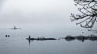 Jour de brouillard au lac