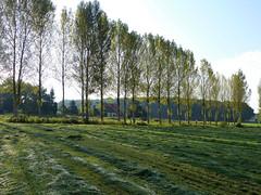 Autumn is in the air (joeke pieters) Tags: 1360026 panasonicdmcfz150 woold winterswijk achterhoek gelderland nederland netherlands holland landschap landscape landschaft paysage landelijk rural