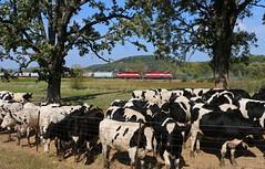 Okee, Wisconsin (UW1983) Tags: trains railroads wsor wisconsinsouthern l863 reedsburgsub reedsburgrocket watco okee wisconsin