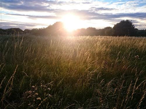 Sunshine over Grassland