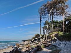 An der wilden Küste (Wunderlich, Olga) Tags: bäume touristen ostsee landschaft natur wolken deu mecklenburgvorpommern dars