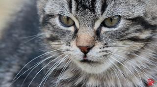 """""""Les chats sont malins et conscients de l'être."""""""