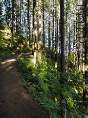 Multnomah-Falls-Columbia-Gorge-DSCN3294