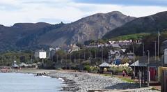 4904 Penmaenmawr beach promenade (Andy - Busyyyyyyyyy) Tags: bbb beach eee esplanade pampasgrass penmaenmawr ppp promenade shingle sss northwales cymru