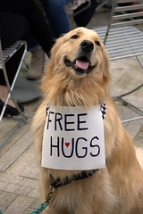 A Popular Dog (swong95765) Tags: dog goldenretriever anima canine k9 cute adorable huggable hug cutie