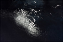 calligraphy on water...... (Brigitte Lorenz) Tags: abstract water light nature calligraphy